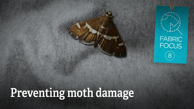 Preventing moth damage to clothes